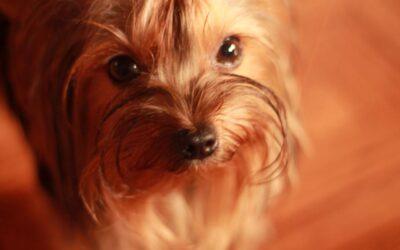 San Roque y el cuidado de mascotas