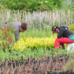 Amalfi conmemora a las mujeres rurales