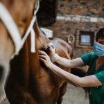 Ciclo de vacunación equina en Guatapé